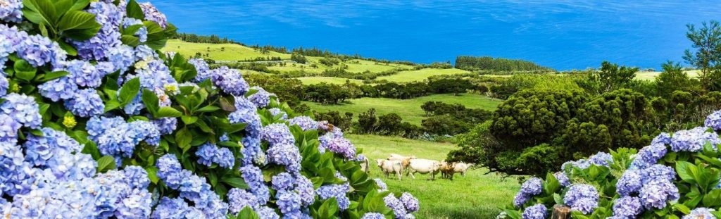 azores holiday beauty of azores coach holiday expert #coachholidayexpert