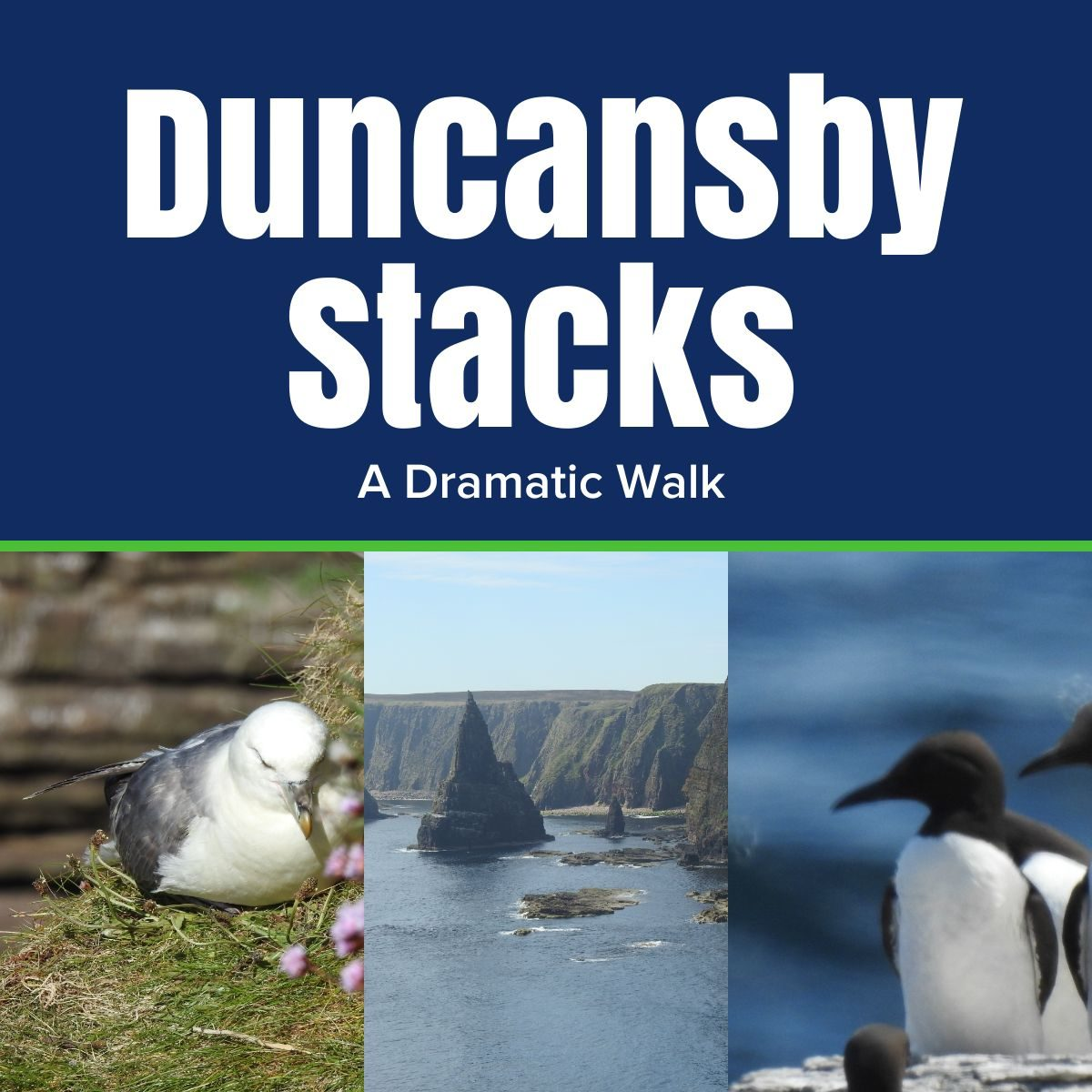 duncansby stacks the professional traveller