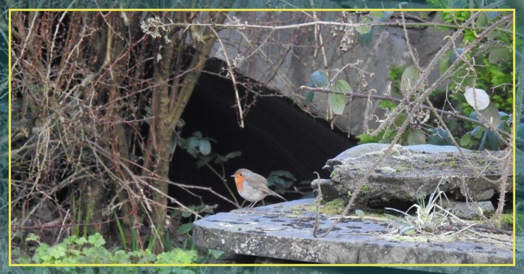 grasmere robin and bridge grasmere lake district the professional traveller