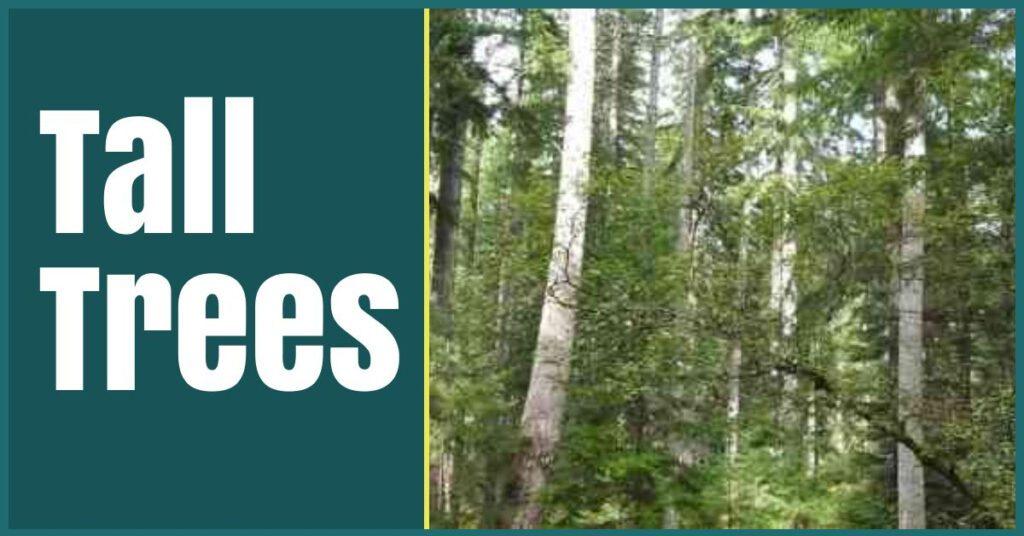 plodda falls tall trees the professional traveller