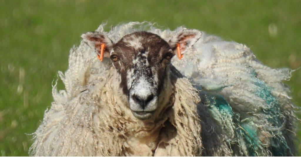 forres self catering ewe the professional traveller