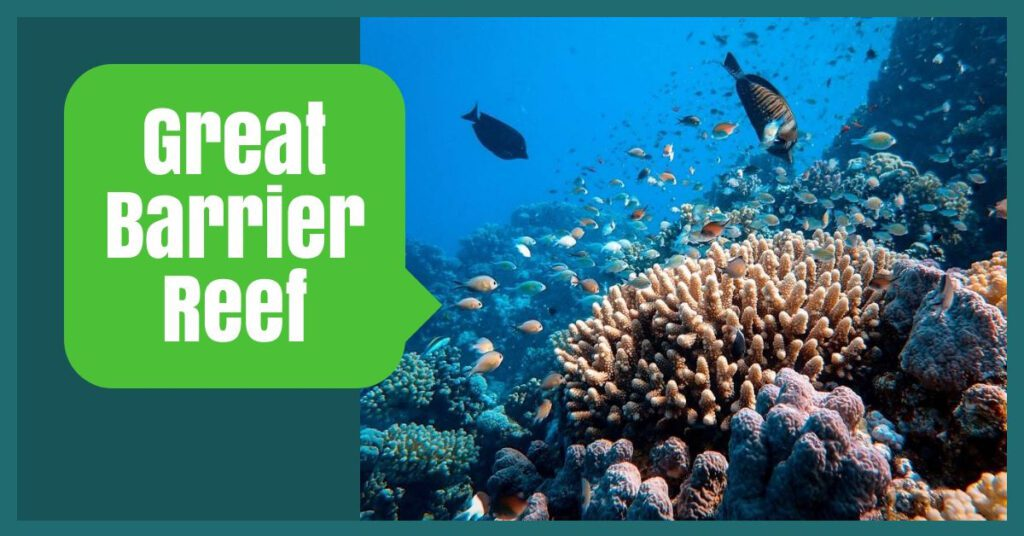 great barrier reef australia tours the professional traveller