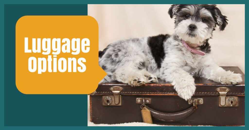 luggage options the professional traveller easyjet baggage