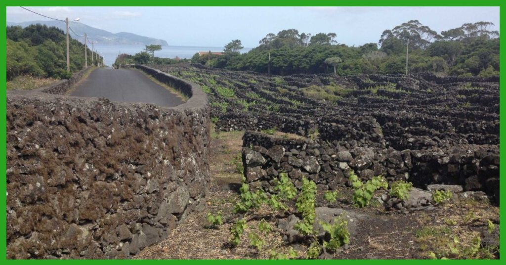 azores island hopping the professional traveller pico island